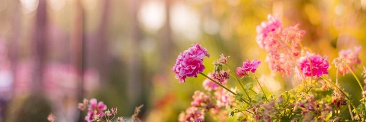 flowers-in-the-garden